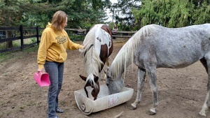 Local Horse Rescue Needs More Regular Volunteers as Winter Encroaches!